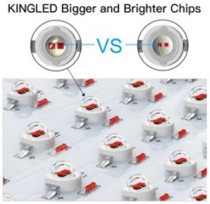 KINGLED Bigger and Brighter